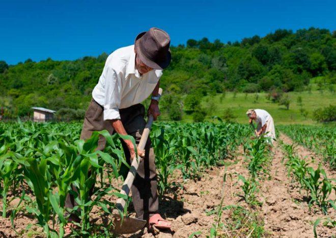 aposentadoria-rural-trabalhador