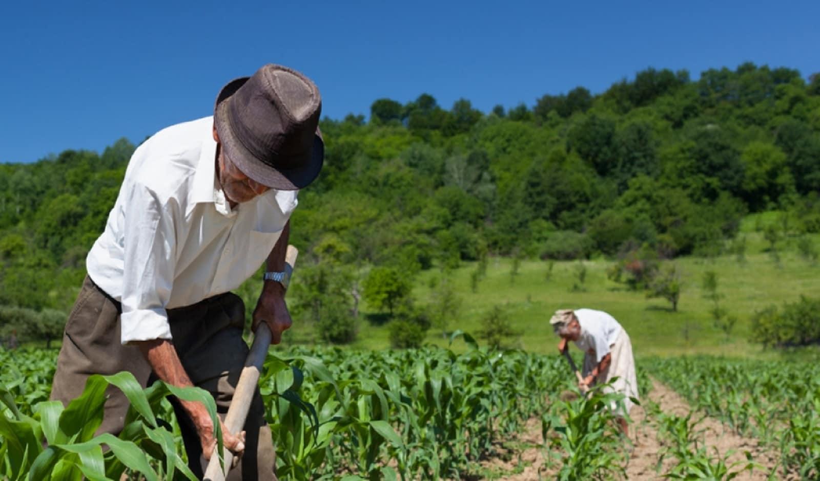 Reforma: aposentadoria rural - veja o que muda