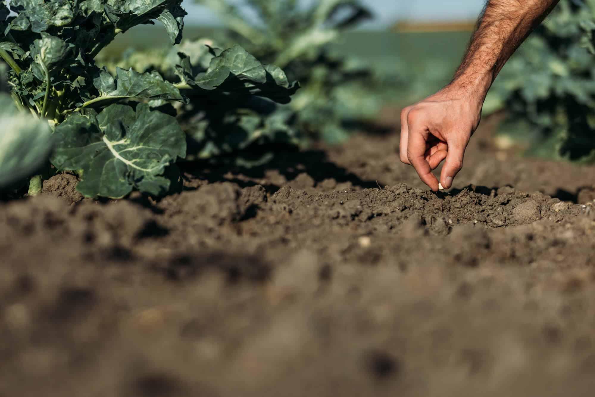 Alterações na autodeclaração do segurado especial rural: o que você precisa saber