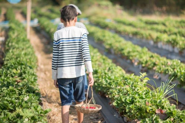 STJ admite o cômputo do trabalho rural anterior aos 12 anos de idade