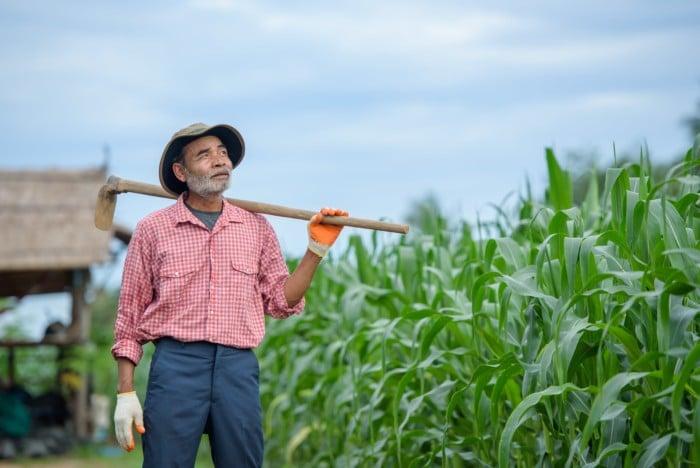 Prorrogação do período de graça ao trabalhador rural