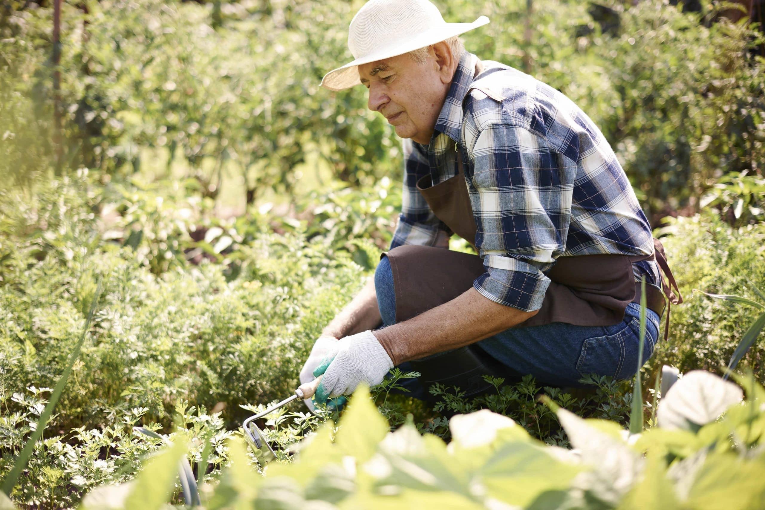 Trabalhador rural segurado especial pode ter empregados?