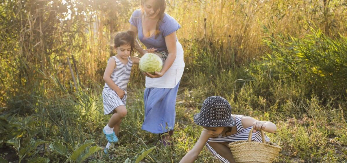 MPF se posiciona a favor do reconhecimento de atividade rural por menor de idade