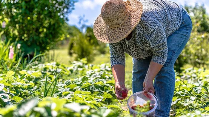 Aprovado auxílio para agricultores familiares afetados pela pandemia da Covid-19