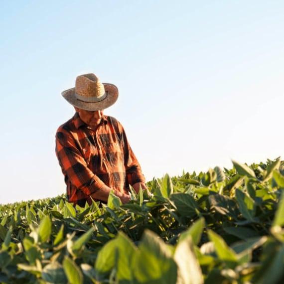 Concedida tutela antecipada de agricultor para aposentadoria rural por idade