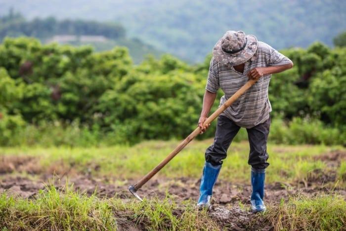 TRF3 decide conceder aposentadoria rural para um trabalhador informal